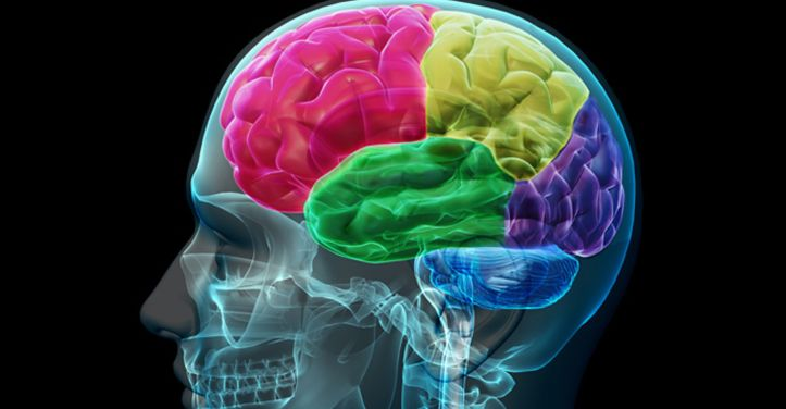 b1874eb583_cerveau1